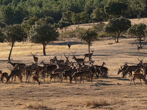 FOTO_Extremadura_Berrea_12092013_-3